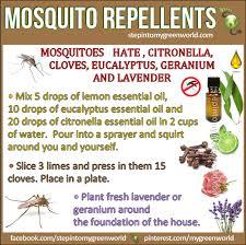 Best Mosquito Killer For Backyard Homemade Pest Control Recipes You U0027ll Love Mosquito Spray