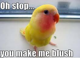 Stop It You Meme - oh stop it you meme by d0p3asfxck memedroid