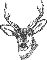 black deer skull tattoo design real photo pictures images and