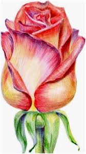 create colored pencil still life drawings landscapes portraits