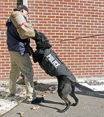 invested in k 9 safety new hampshire eagletribune com