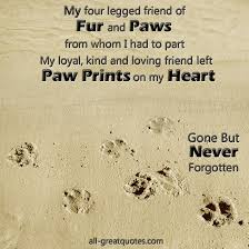 the loss of a pet quotes 45 loss of pet quotes but never forgotten