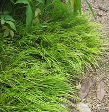 native oklahoma plants plants hoffman nursery