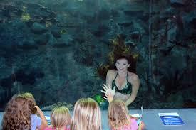 weeki wachee mermaids aquarium works