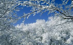 trees covered with snow wallpaper winter nature wallpapers in jpg