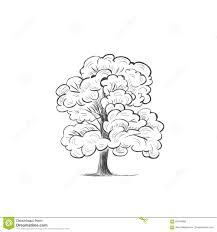 Oak Tree Drawing Oak Tree Skech Illustration Drawing Hand Stock Vector Image