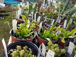 Pretty Plants by Exploring Chadwick Arboretum U0027s A K A Pretty Plants At Osu U2013 Cbus