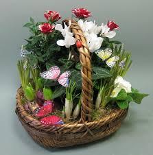 Indoor Plant Arrangements 16 Best Dish Gardens Images On Pinterest Dish Garden Plants And