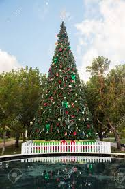 large tall christmas tree in exterior park in key biscayne florida