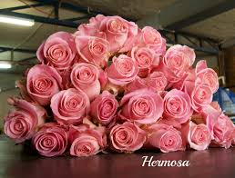 Flowers For Valentines Day Top Rose Color Trends For Valentine U0027s Day Amore Fiori Flowers