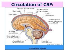 Blood Brain Barrier Anatomy Csf U0026 Ventricles