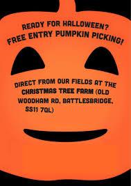 christmas tree farm battlesbridge