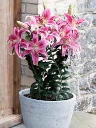 Fragrant Plants For Pots - plant pots of perfume hgtv