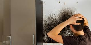 mold remediation los angeles ca absolute maintenance services