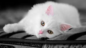 Small Wallpaper by Funny Wallpaper Funny Wallpapers Cats U0026 Kittens 3