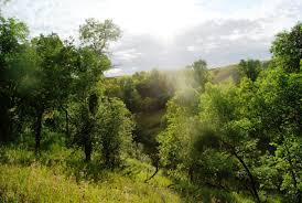 North Dakota forest images Everyone should visit mineral springs waterfall in north dakota jpg