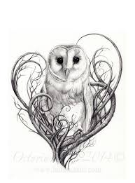 drawn owl feminine pencil and in color drawn owl feminine
