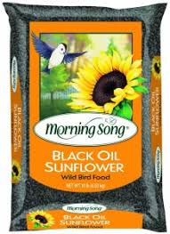 high quality black oil sunflower seeds 10lb 50lb bags