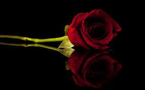 Dark Red Flower - dark red roses wallpaper wallpapersafari