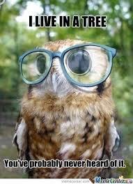 Funny Owl Meme - hipster owl s too hip meme slapcaption com on we heart it