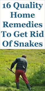 best 25 keep snakes away ideas on pinterest where do snakes