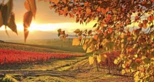imagenes de otoño para fondo de escritorio otoño fotos e imágenes de otoño en gratistodo