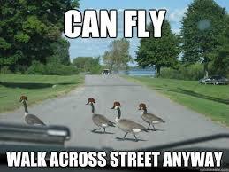 Goose Meme - the best of scumbag geese meme