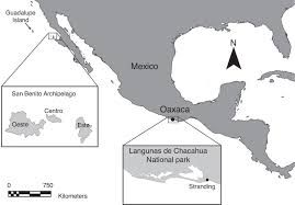 Oaxaca Mexico Map Southernmost Presence Of The Guadalupe Fur Seal Arctocephalus