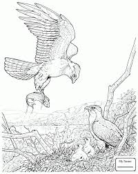 coloring pages birds bald eagle in flight eagle colorpages7 com