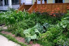 pictures of front yard vegetable gardens one hundred dollars a month