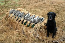 Layout Blind For Sale Alducks Com U2022 View Topic Layout Blinds