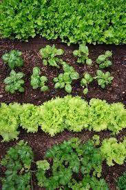crop rotation tips for hobby farm beginners blain u0027s farm u0026 fleet