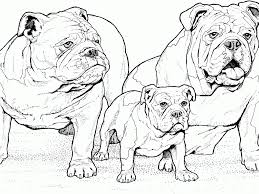 download bulldog coloring pages ziho coloring