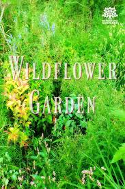 my wildflower garden in the creekbed don u0027t mow it the