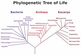 archaea u0026 bacteria similarities u0026 differences video u0026 lesson