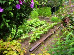 indian organic fertilizer stimulates vegetables and flowers