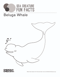 beluga whale one world one ocean