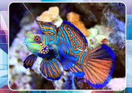 ornamental fish culture version apk androidappsapk co
