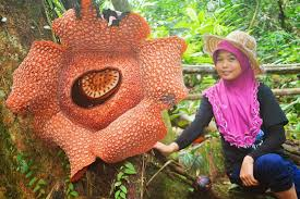 have you seen the largest flower in the world