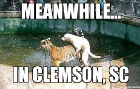 Clemson Memes - dog humping tiger meanwhile in clemson sc weknowmemes