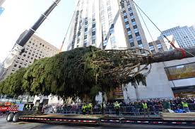 rockefeller center tree arrives in nyc cbs news