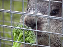 rid groundhogs steps tips