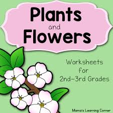 plants and flowers worksheet packet mamas learning corner