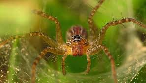 indentification pacific northwest spiders sciencing