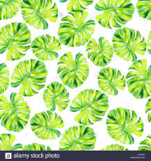 tropical wrapping paper a leaf of a tropical plant monstera philodendron el plant