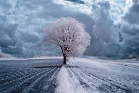 the majestic of trees in poland captured in infrared