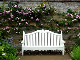 part one of a pruning care and maintenance plan for your roses