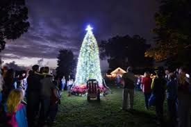 tree lighting at ulupalakua by mauiwine 4th annual go