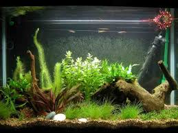 65 best aquarium decor images on aquariums aquarium
