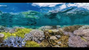 watch online chasing coral 2017 full movie hd trailer chasing coral documentary full movie english online free youtube